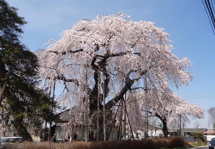 那珂川町の春