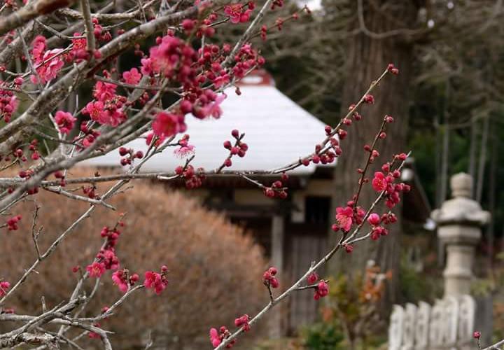 那珂川町の冬